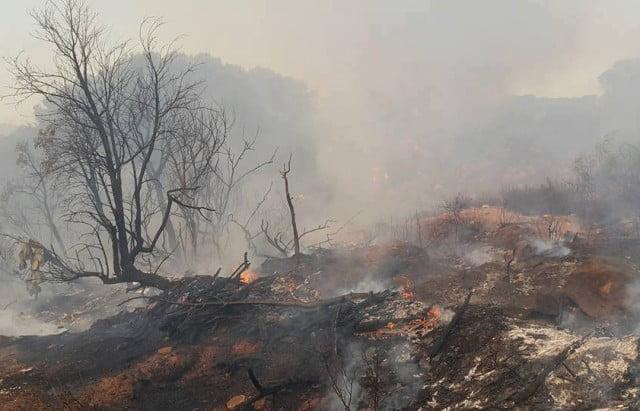 حرائق غابات جبال القصرين