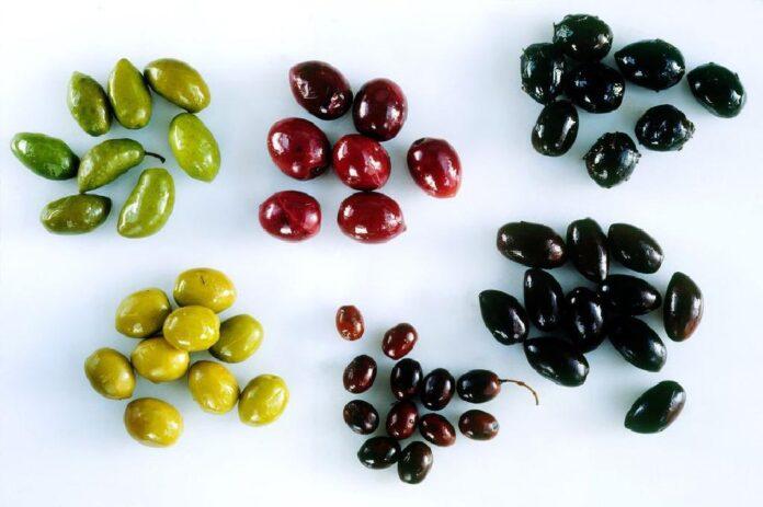 مؤسسة التمويل الدولية تدعم CHO من أجل الإنتاج البيئي لزيت الزيتون